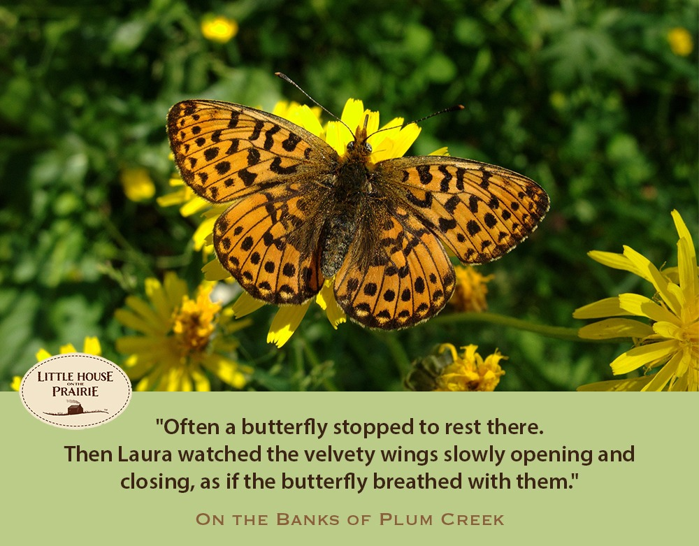 Often a butterfly stopped to rest there