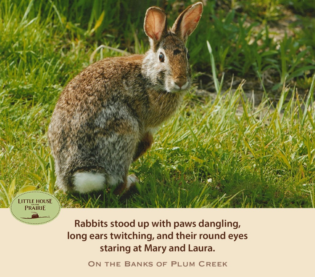 Rabbits stood up with paws dangling, long ears twitching