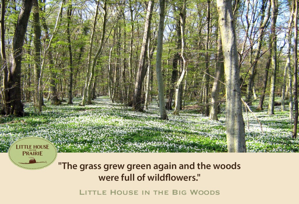 he grass grew green again and the woods were full of wildflowers
