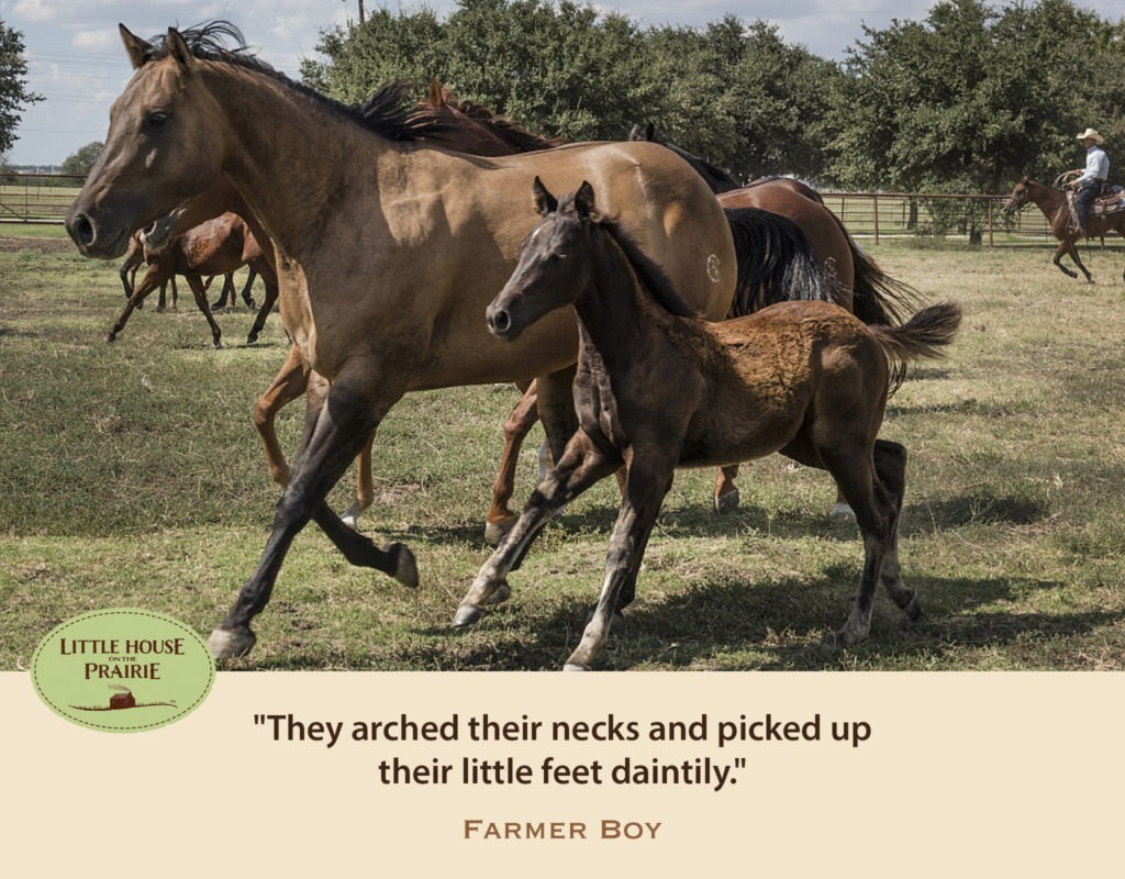 They arched their necks and picked up their little feet daintily