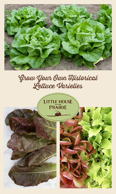 Grow Your Own Historical Lettuce