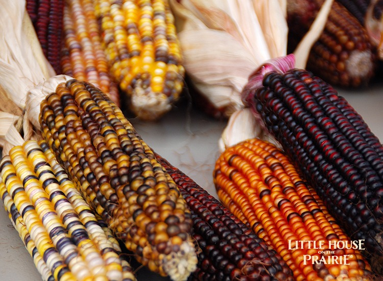 Heirloom corn is often colorful and beautiful