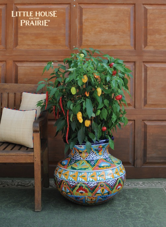 Gorgeous peppers grow together in this container for beautiful accent colors for your home.