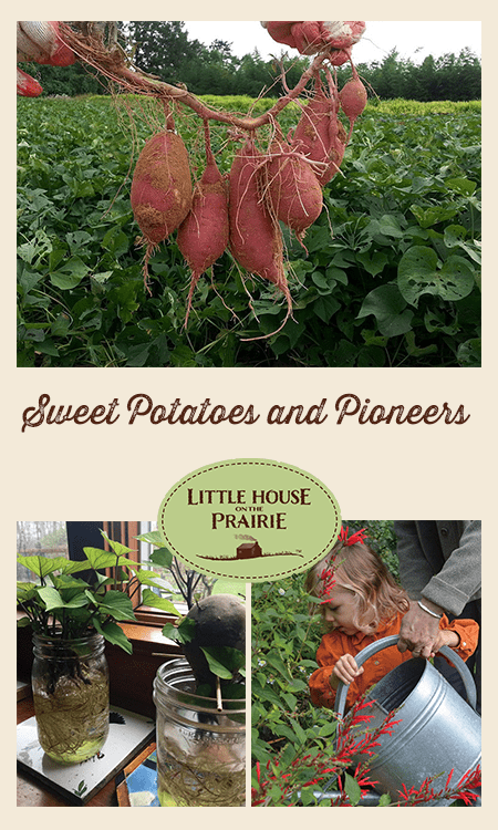 Sweet Potatoes and Pioneers