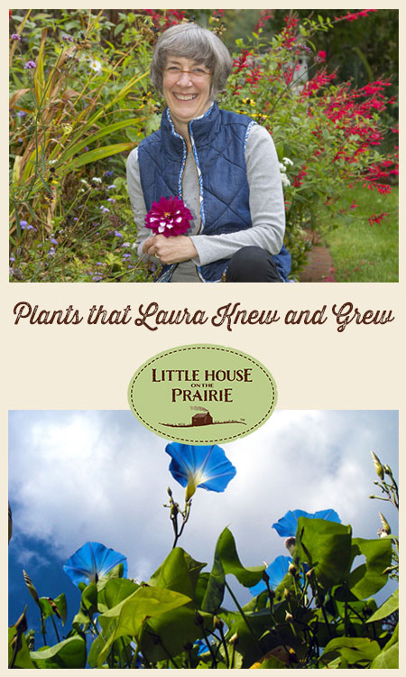 The Plants that Laura Ingalls Knew, and Grew
